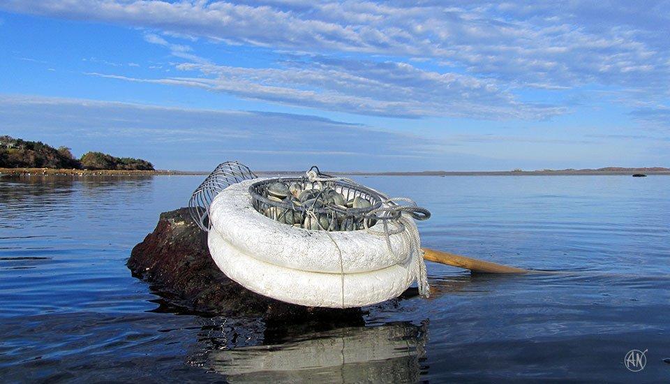 clams_1305