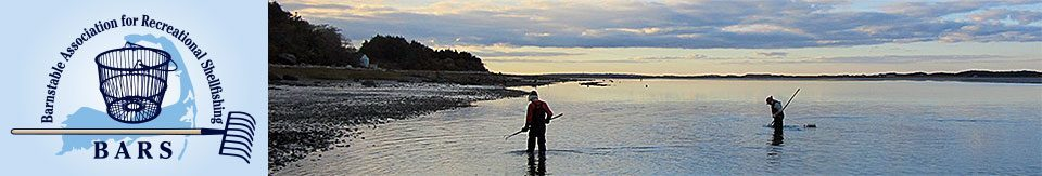 Barnstable Association for Recreational Shellfishing