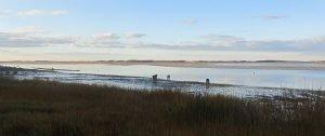 Shellfishing-Scudder-Lane