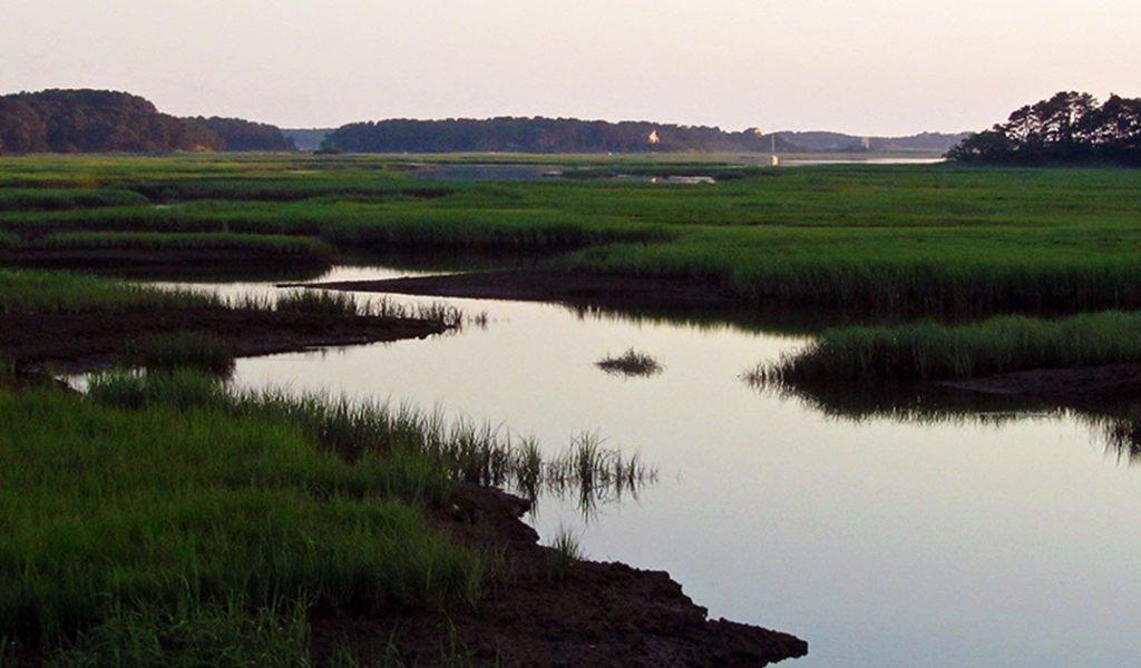 Welfleet Marsh