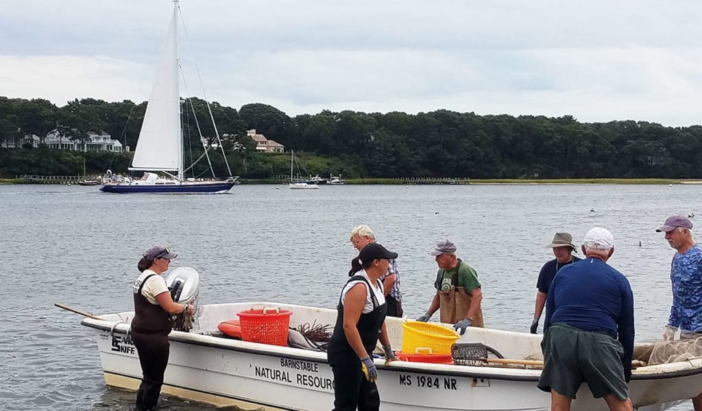 Liz Lewis and volunteers at Handy Point, Cotuit, Cape Cod