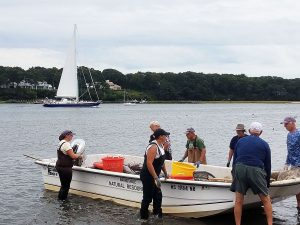 Liz Lewis and volunteers at Handy Point, Cotuit, Cape Cod