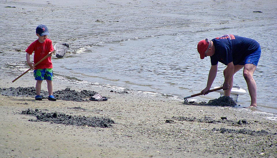 Father and son shellfishing at Bridge Street Osterville