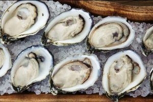 triploid oysters